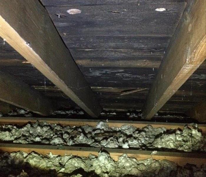 Mysterious Mold In Attic Spaces! Before