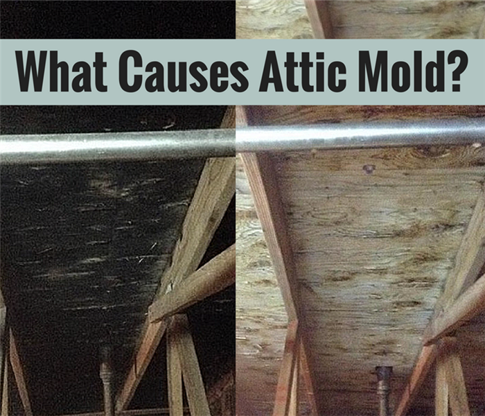 Mold Remediation Attic Mold Causes and Remediation in New Haven County Homes