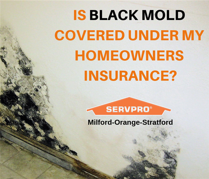 Mold Remediation Does Your Insurance Policy Cover Mold Growing in Your Home?